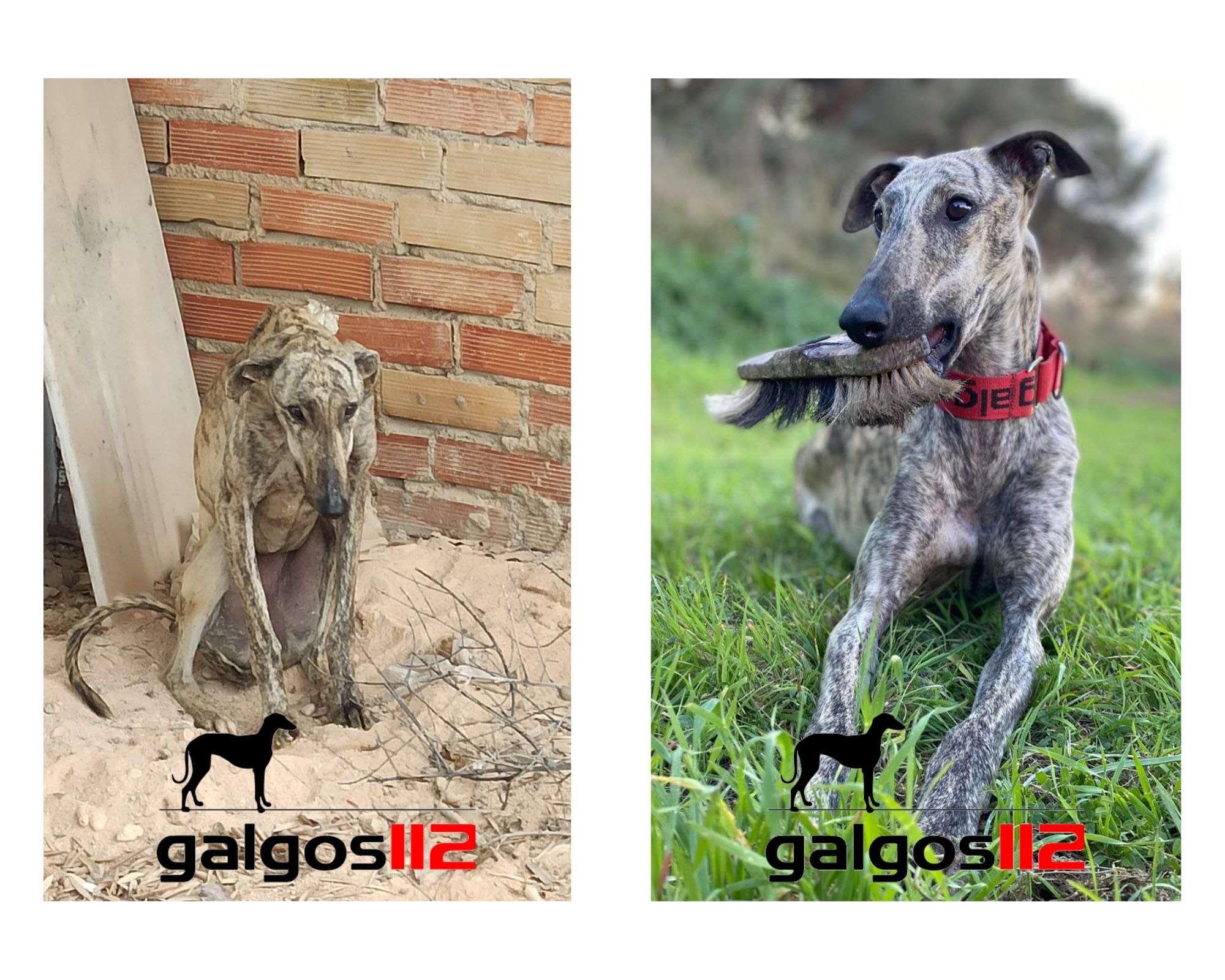 ONG Galgos 112